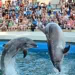 Foto: Un delfinariu va fi deschis în această săptămână
