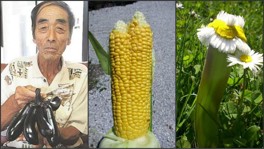 Foto: Efectul catastrofei nucleare de la Fukushima! Japonia este invadată de flori şi fructe mutante
