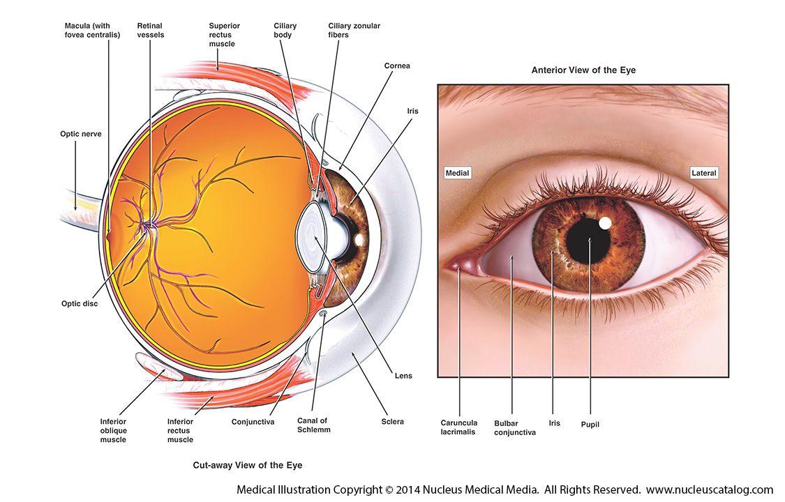 Glaucoma_4063093