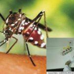 Foto: Un vast studiu asupra consecinţelor infecţiei cu virusul Zica este lansat în lume