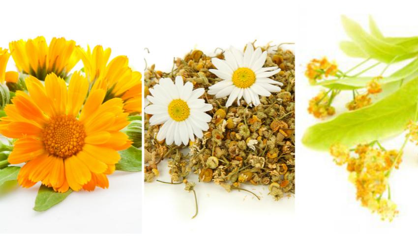Foto: Cum să usuci corect plantele medicinale