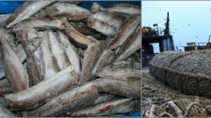 Foto: Cum ajunge peştele în magazine? Prins în țările nordice, acesta vede China, Coreea de Sud şi probabil încă vreo două ţări
