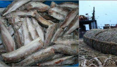 Cum ajunge peştele în magazine? Prins în țările nordice, acesta vede China, Coreea de Sud şi probabil încă vreo două ţări
