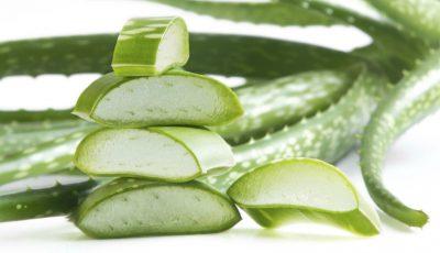 Aloe Vera – planta care face minuni pentru sănătate! Se merită de știut efectele ei