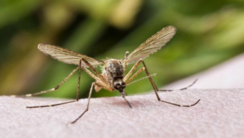 Foto: Alertă pe litoral! Țânțarul care transmite virusul Zika a apărut în Constanța