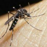 Foto: Virusul Zika, confirmat în România!