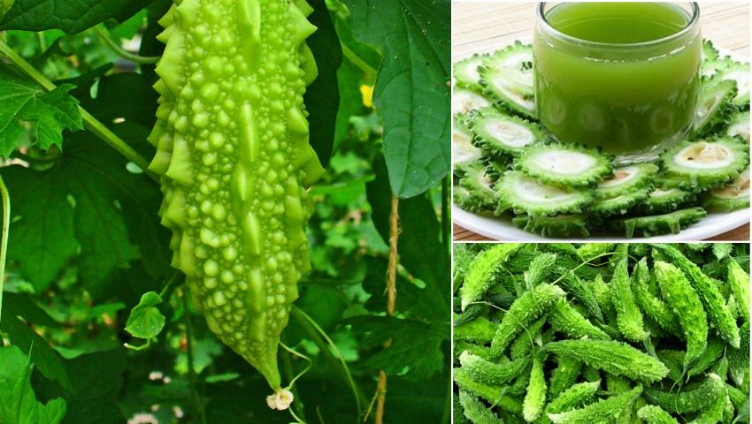 Foto: Castravetele amar, o sursă naturală de ,,insulină'' vegetală, purifică sângele şi stimulează digestia