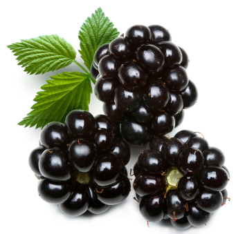 dewberry; object on a white background