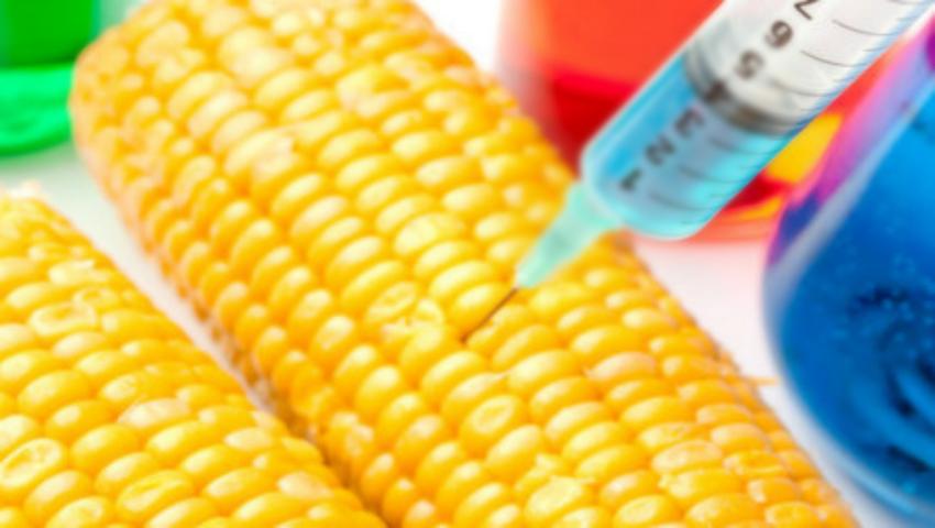 Foto: Alimentele modificate genetic vor fi interzise în Rusia!