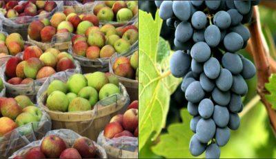 """Fructele şi legumele din Moldova, apreciate la expoziția """"World Food Moscow-2016""""!"""