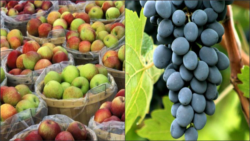 """Foto: Fructele şi legumele din Moldova, apreciate la expoziția """"World Food Moscow-2016""""!"""