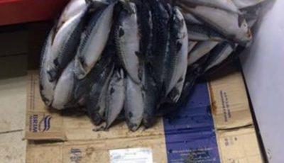 Revoltător! Un magazin din capitală păstrează peştele îngheţat pe pardoseala plină de noroi!