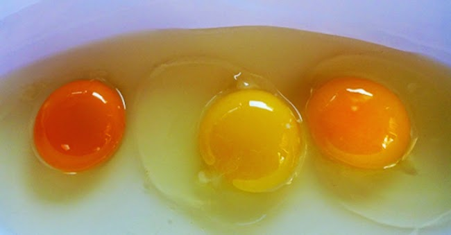 guess-which-one-of-these-egg-yolks-is-actually-from-a-healthy-chicken