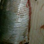 Foto: Pește infestat cu paraziți, la un magazin din Capitală!