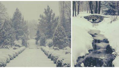 Grădina Botanică din Chișinău, în imagini spectaculoase de iarnă! Vezi cum arată