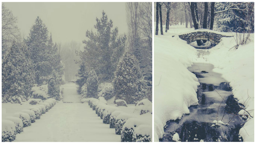 Foto: Grădina Botanică din Chișinău, în imagini spectaculoase de iarnă! Vezi cum arată