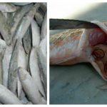 Foto: Specialiștii avertizează! Cantități mari de pește infestat cu paraziți ajung la vânzare în Moldova
