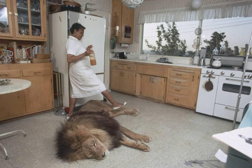 Animalele sălbatice nu vor mai putea fi ţinute acasă! Emiratele Arabe Unite pun amenzi de 136.000 de dolari