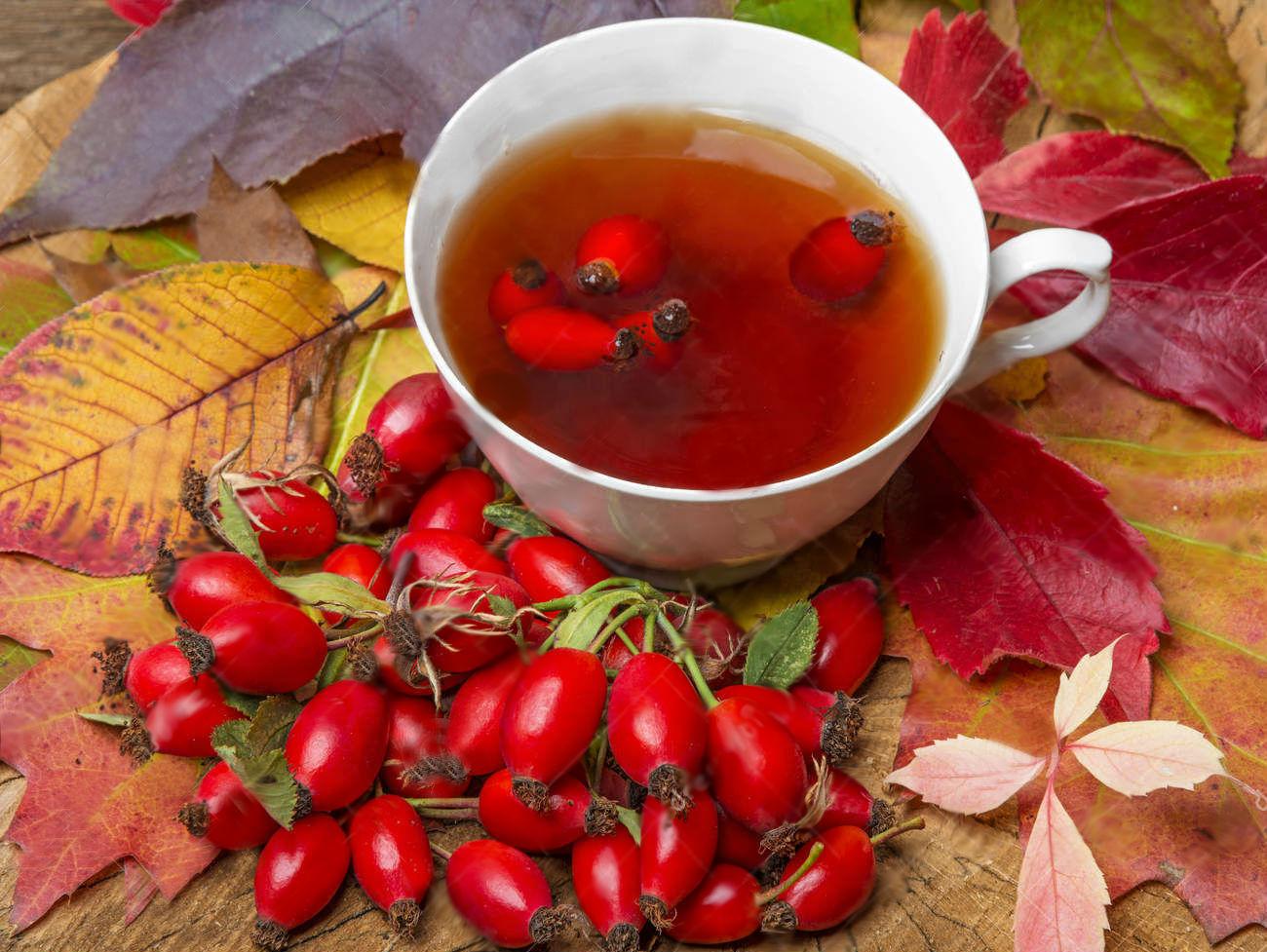shipovnik-chai