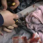 Foto: Îngrozitor! Și-a prins mâna în tocătorul de carne și a avut nevoie de intervenția salvatorilor