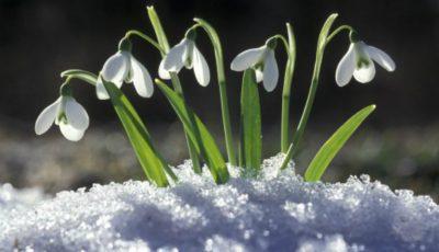 Primăvara e aproape. Vezi de când se încălzește vremea