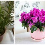 Foto: 9 plante pe care trebuie să le ai în casă! Purifică aerul și neutralizează toxinele
