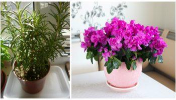 9 plante pe care trebuie să le ai în casă! Purifică aerul și neutralizează toxinele