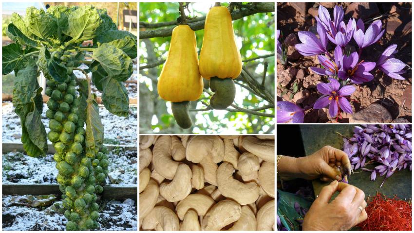 Foto: Cum arată unele fructe și legume înainte de a fi recoltate! Imagini surprinzătoare