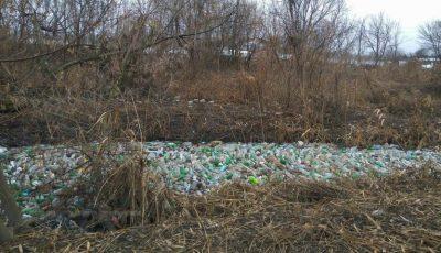 Un grup de tineri a curățat râul Bîc! Iată cum arată acum