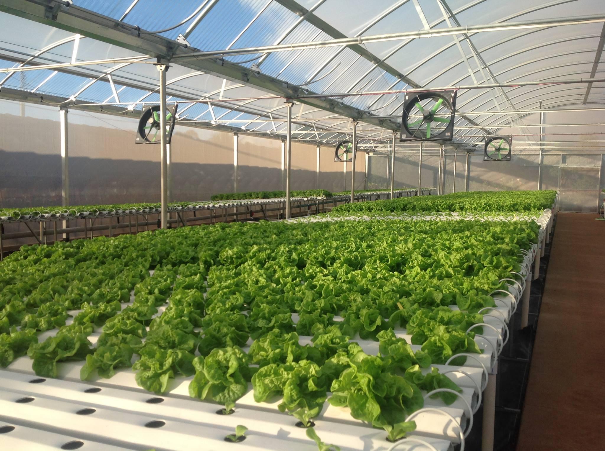 Imagini ocante se cultiv tone de legume f r p m nt for Soil less farming