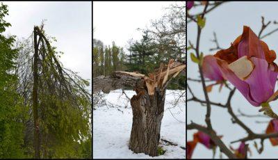 Grădina Botanică din Chișinău distrusă în proporție de 80%. Imagini care îți frâng inima