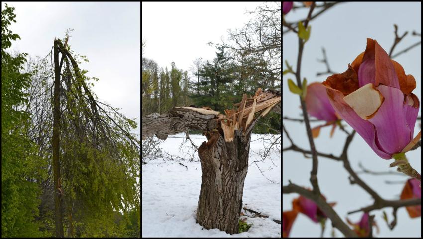 Foto: Grădina Botanică din Chișinău distrusă în proporție de 80%. Imagini care îți frâng inima