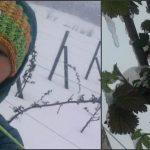 Foto: Un exportator străin a anunțat că va cumpăra pomușoarele din Moldova!
