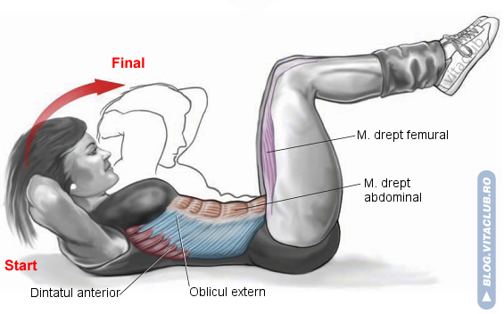 abdomene