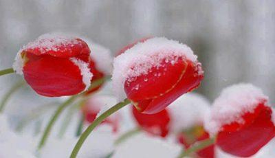 În Moldova va ninge. Iată când