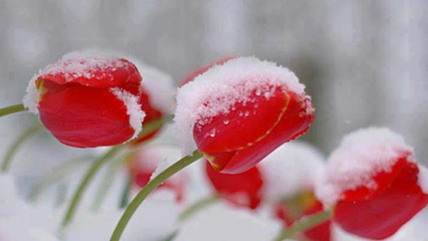 Foto: În Moldova va ninge. Iată când