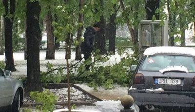 FOTO Dorin Chirtoacă adună crengile din Parcul Central al Capitalei