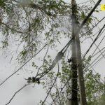 Foto: Caz TRAGIC! Angajatul unei școli din Chișinău, strivit de un copac