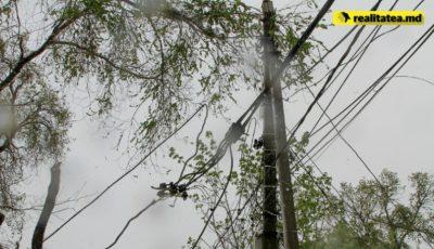 Caz TRAGIC! Angajatul unei școli din Chișinău, strivit de un copac