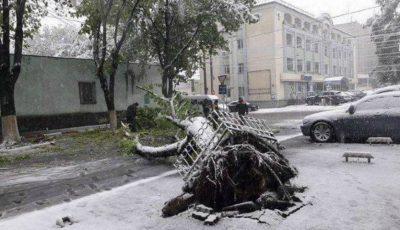 Copaci doborâți și 80 de localități, fără electricitate, din cauza vremii