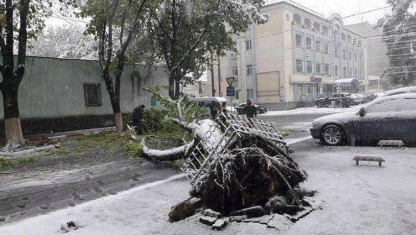 Foto: Copaci doborâți și 80 de localități, fără electricitate, din cauza vremii