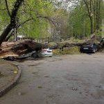 Foto: Copac doborât de vânt în Capitală! Trei maşini au fost distruse concomitent