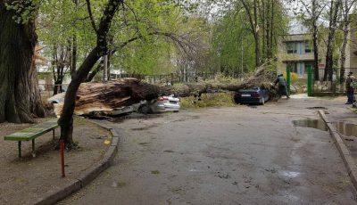 Copac doborât de vânt în Capitală! Trei maşini au fost distruse concomitent