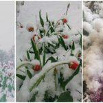 Foto: Zăpadă la sfârșit de aprilie! Cum arată astăzi Chișinăul!