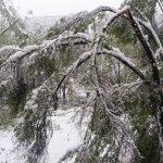 Foto: Unde să sunăm în Chișinău, dacă am văzut copaci sau crengi rupte!