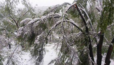 Unde să sunăm în Chișinău, dacă am văzut copaci sau crengi rupte!