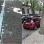 Foto: Primăria Capitalei îndeamnă chișinăuienii să renunțe la practica de văruire a copacilor și bordurilor! Află motivul