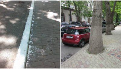 Primăria Capitalei îndeamnă chișinăuienii să renunțe la practica de văruire a copacilor și bordurilor! Află motivul