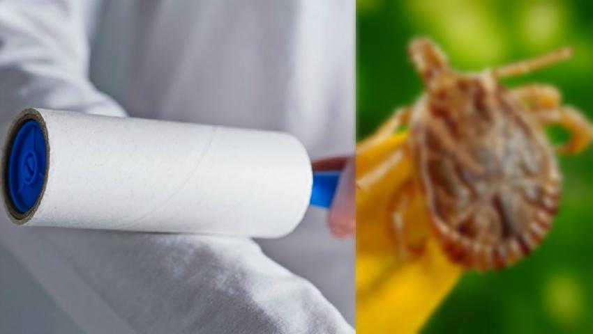 Acest truc te va apăra de căpușe și țânțari!