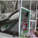 Foto: O gheretă de flori din centrul Capitalei, complet distrusă de un copac uriaș căzut peste ea!